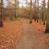 Bourne Woods dog walk, Lincolnshire - Dog walks in Lincolnshire