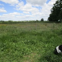 M69 Junction2 dog walk and cafe, Leicestershire - dog walk and cafe Leicestershire
