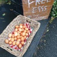 A1 Dog walk and dog-friendly pub with good food, Northumberland - whitehorse2.jpg