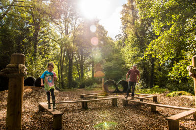 A38 country park for family activities and dog walks, Devon - Driving with Dogs