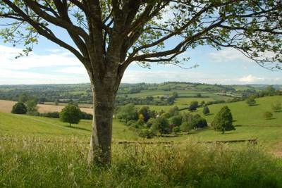 Dog-friendly pub and dog walk in pretty village, Somerset - Driving with Dogs
