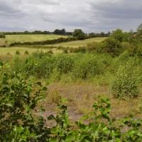 M1 - Tibshelf Services dog walk, Nottinghamshire