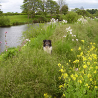A44 riverside dog walk, Worcestershire - Dog walks in Worcestershire