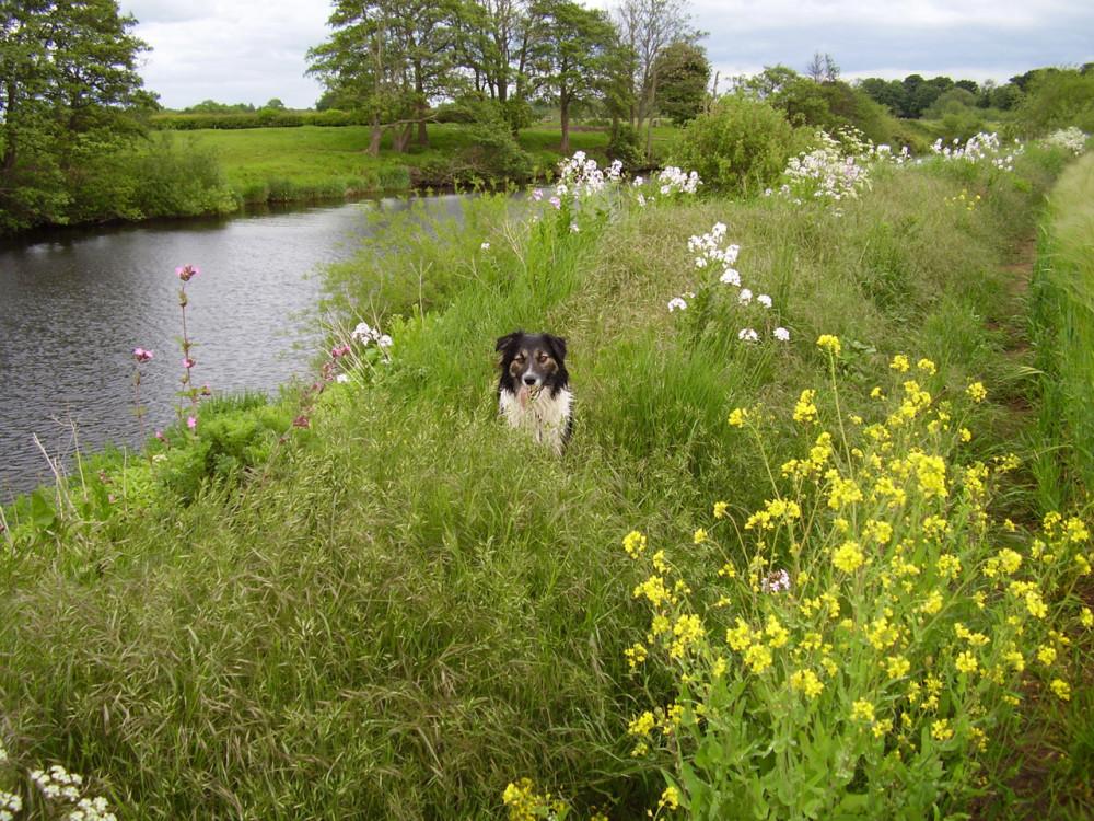 A44 riverside dog walk, Worcestershire - Dog walks in Worcestershire