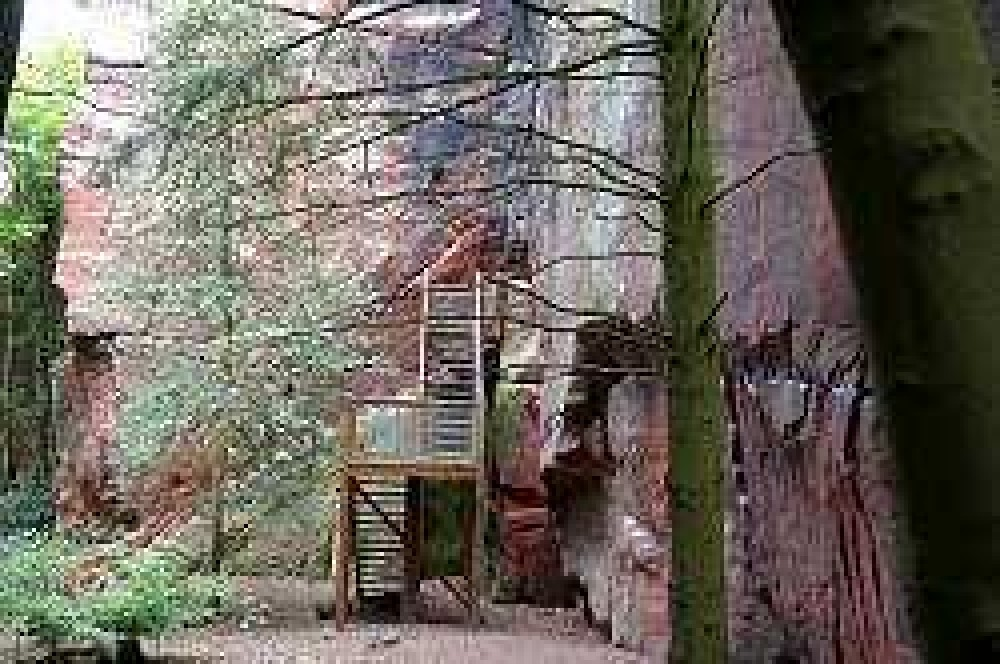 Nesscliffe Country Park, Shropshire - Dog walks in Shropshire