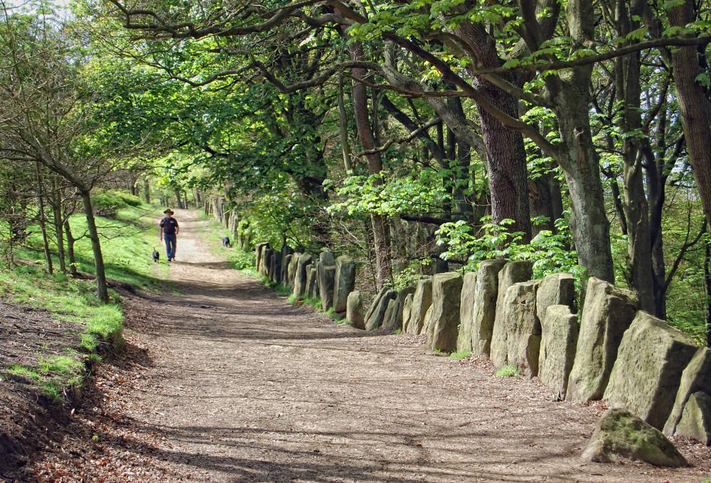 Otley dog walk and dog-friendly pub, Yorkshire - Dog walks in Yorkshire