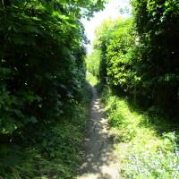 Dog-friendly pub and dog walk between Northampton and Rugby, Northamptonshire - Dog walks in Northamptonshire