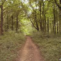 Whitwell dog walk near Worksop, Yorkshire - Dog walks in Yorkshire