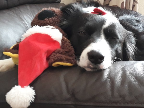 Bella having a cuddle with her teddy