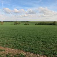 Dog-friendly dining pub and walk close to M11 Jct 13 and Cambridge, Cambridgeshire - Dog walks near Cambridge.jpg