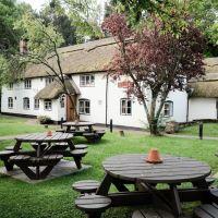 A326 dog-friendly pub and paw stretch near Southampton, Hampshire - Hampshire dog-friendly pub and dog walk