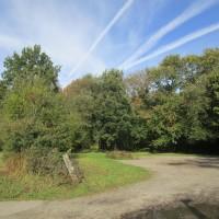 Woodland dog walk near Petham, Kent - Kent dog walks and dog-friendly pubs