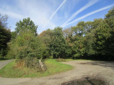 Woodland dog walk near Petham, Kent - Driving with Dogs