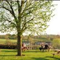 Mottram Cross dog walk and dog-friendly pub, Cheshire - dog-friendly Cheshire.jpg