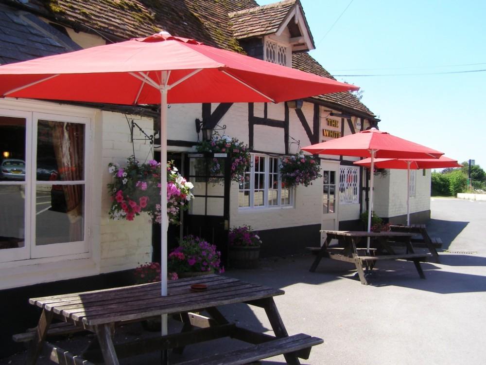 Woodland walk and dog-friendly pub near Romsey, Hampshire - Hampshire dog-friendly pub and dog walk