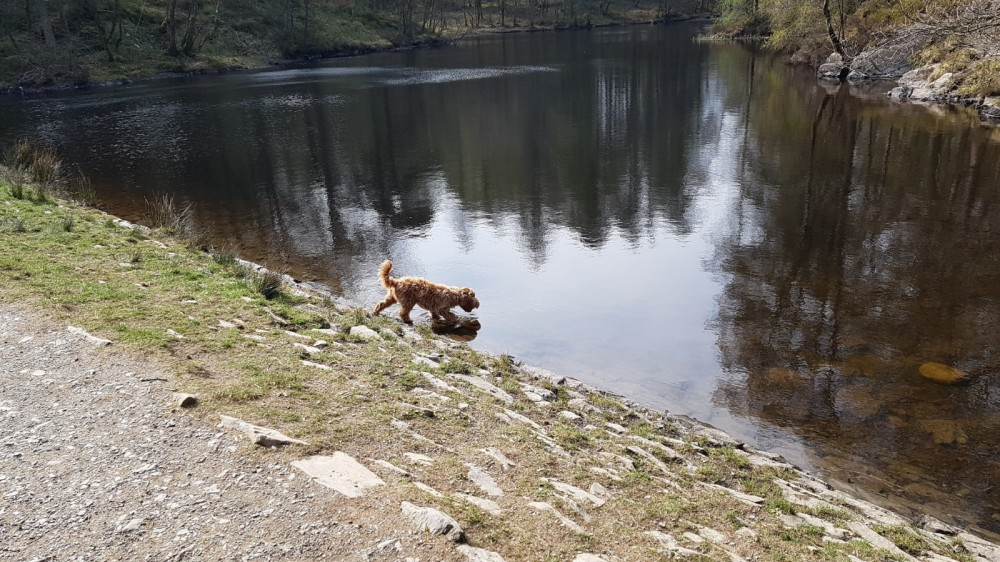 High Dam dog walk, Cumbria - 20190415_152235.jpg