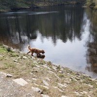 High Dam dog walk, Cumbria - 20190415_152235.jpg
