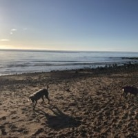 Powfoot Beach - dog-friendly, Scotland - 3B26DE02-0913-4056-8A3F-2A5772DBA4EA.jpeg