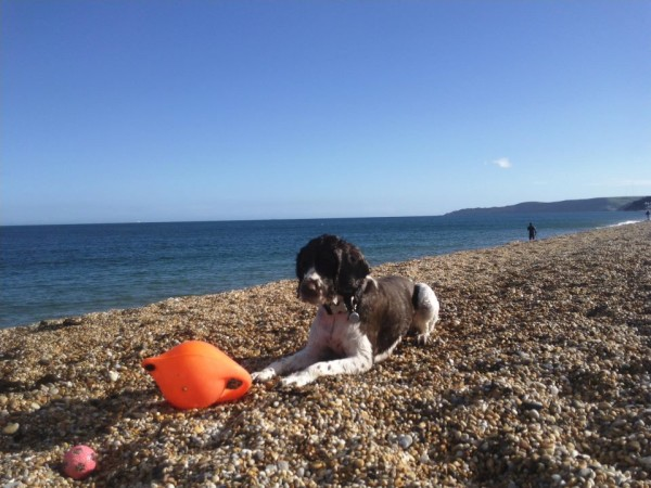 Goater Beach a.jpg