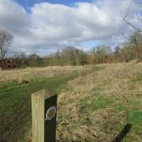 A44 dog walk and dog-friendly pub near Pershore, Worcestershire - Dog walks in Worcestershire