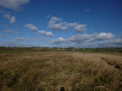 Dog-friendly pub and walk on the Level, Somerset - Driving with Dogs
