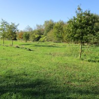 Detling dog-friendly pub, Kent - Kent dog walk and dog-friendly pub