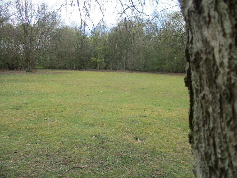 Dog walk on the Common near Norwich, Norfolk - Norfolk nature ramble with the dog.JPG