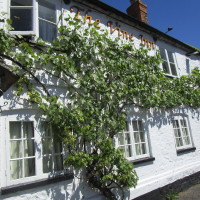 A420 dog-friendly pub and short dog walk, Oxfordshire - Oxfordshire dog-friendly pub and dog walk
