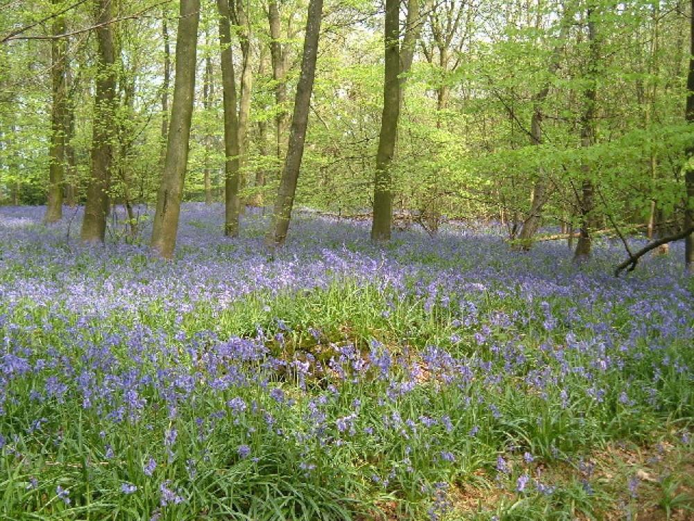 Abbot's Wood dog walk, East Sussex - Dog walks in Sussex