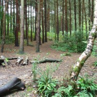 Woodlands dog walk near Horsham, West Sussex