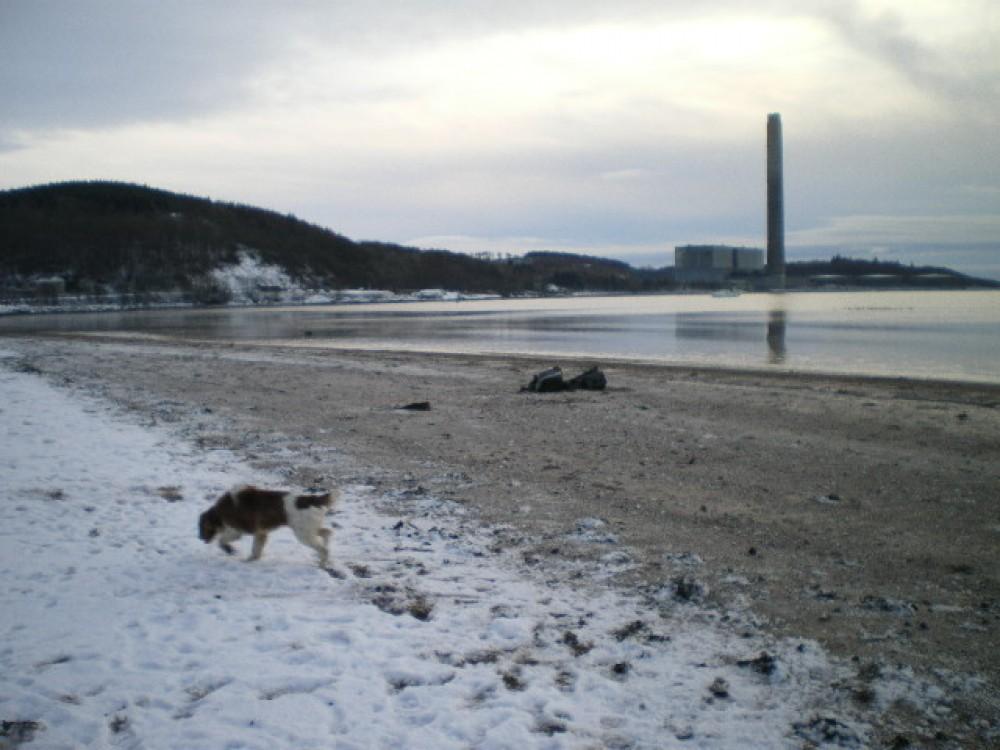 A78 dog-friendly beach walk at Inverkip, Scotland - Dog walks in Scotland