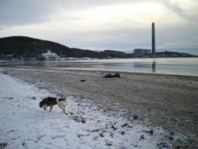 A78 dog-friendly beach walk at Inverkip, Scotland - Driving with Dogs