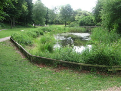 A3 country park walk and dog-friendly pub, Hampshire - Driving with Dogs