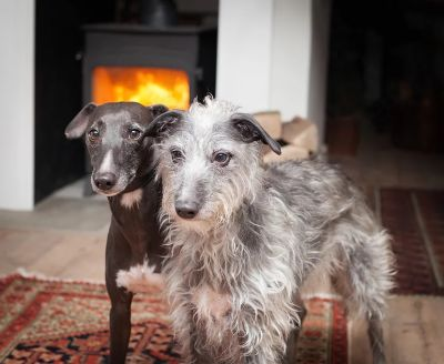 A149 dog-friendly inland pub near Wells next the Sea, Norfolk - Driving with Dogs