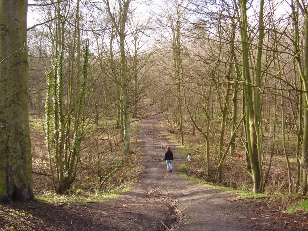 M1 Junction 35 woodland dog walk and dog-friendly pub, Yorkshire - Dog walks in Yorkshire