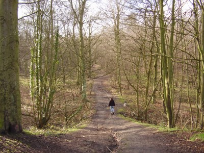 M1 Junction 35 woodland dog walk and dog-friendly pub, South Yorkshire - Driving with Dogs