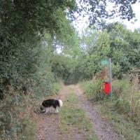 Dog-friendly pub and dog walk near Olney, Buckinghamshire - Dog-friendly pub and walkies in Buckinghamshire
