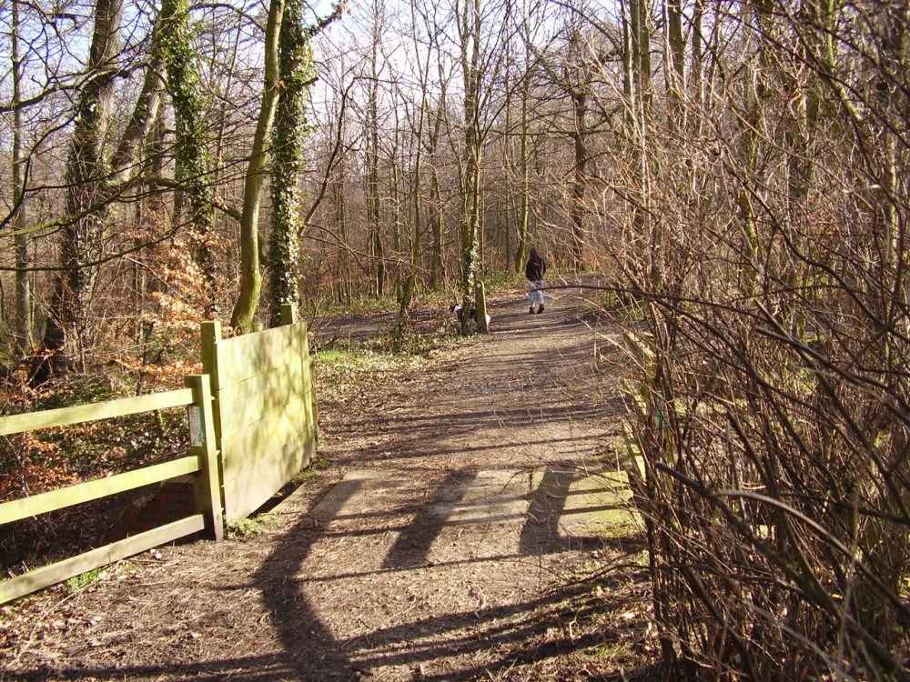 Scholes Coppice dog walk near Rotherham, Yorkshire - Dog walks in Yorkshire