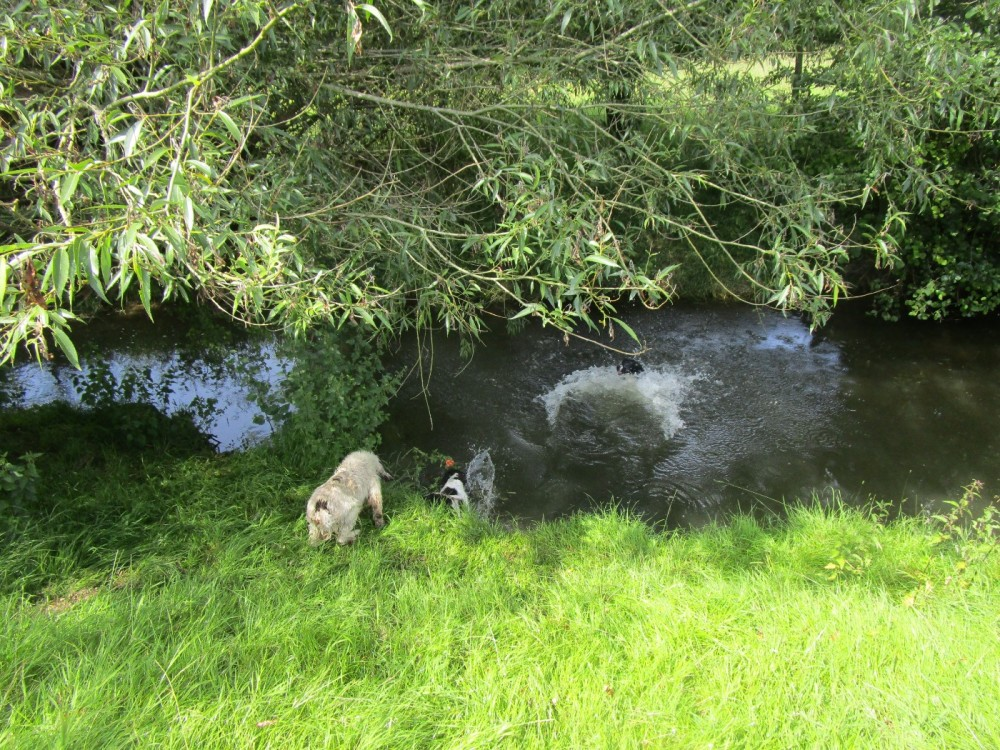 Dog walk and dog-friendly pub on the Welsh border, Shropshire - Shropshire dog-friendly pubs and dog walks.JPG