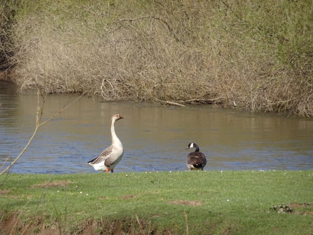Riverside dog Walk, Worcestershire - 0413799E-749E-47E8-B8E0-E6DAFE815AF9.jpeg
