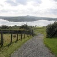 Killyleagh dog walk near Downpatrick, NI - Dog walks in Northern Ireland