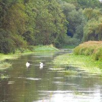 A5 dog walk and cafe, Shropshire - Dog walks in Shropshire