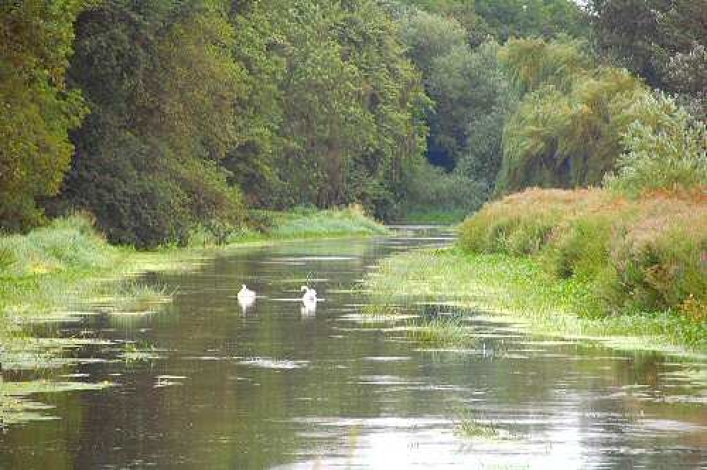 A5 dog walk and cafe near Shrewsbury, Shropshire - Dog walks in Shropshire