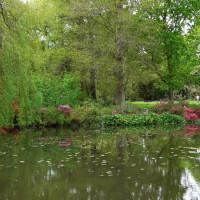 Bushy Royal Park dog walks, Surrey - Dog walks in Surrey