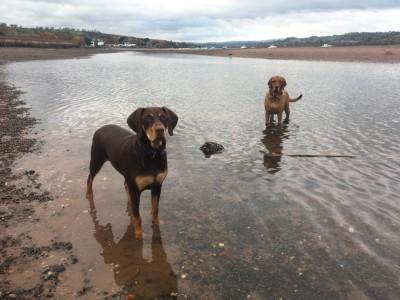 DebOscarSkylar - Driving with Dogs