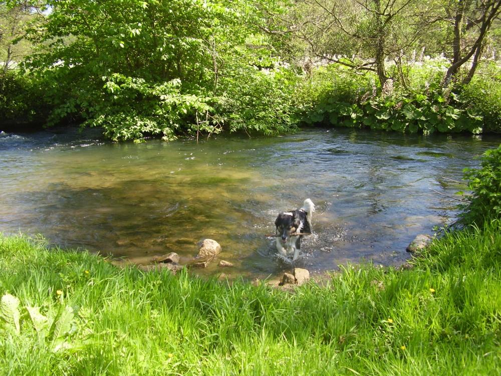Dog walk and dog-friendly pub near Ashbourne, Derbyshire - Peak District dog-friendly pub and dog walk