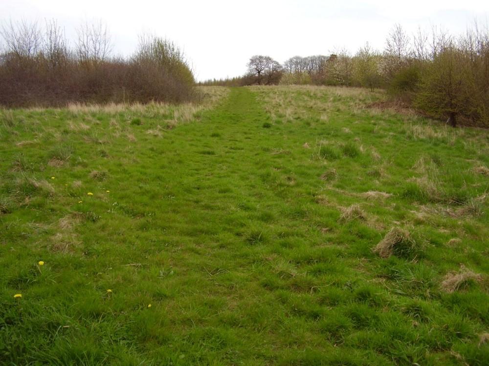 Birdwell local dog walk, Yorkshire - Dog walks in Yorkshire