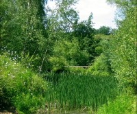 Bedfont Lakes, Greater London - Dog walks in Greater London