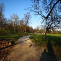 Crystal Palace local dog walks, Greater London - Dog walks in Greater London