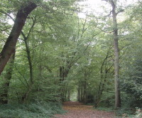 Bayhurst Wood, Greater London - Dog walks in Greater London